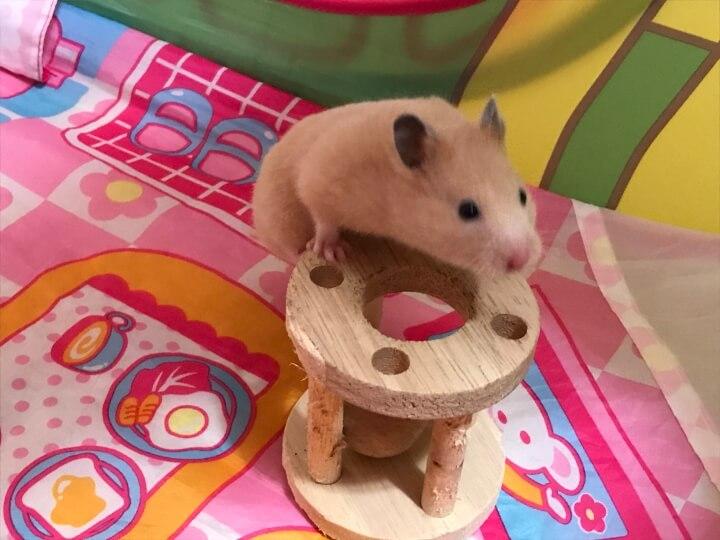 ハムスターがかじり木で遊ぶ